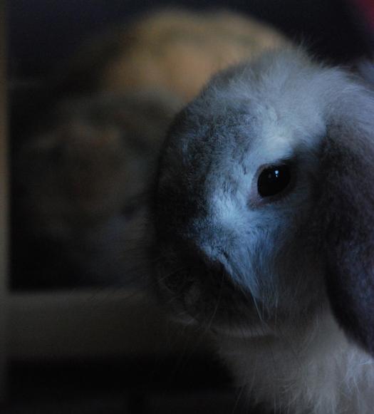 Polly the Rabbit
